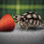 turtle-strawberry