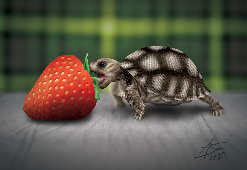 Baby Turtles Eating Strawberry Baby Turtle Eating Strawberry